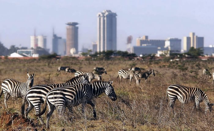 Kenya Tanzania Migration Safari