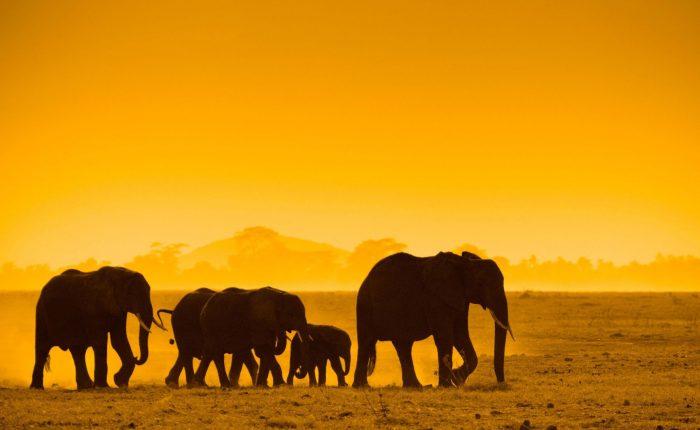 Best of Kenya Safari