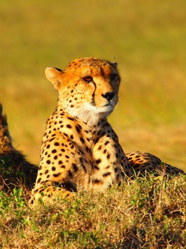 3 Days 2 Nights Samburu Kenya Safari Tour. Leadwood Expeditions