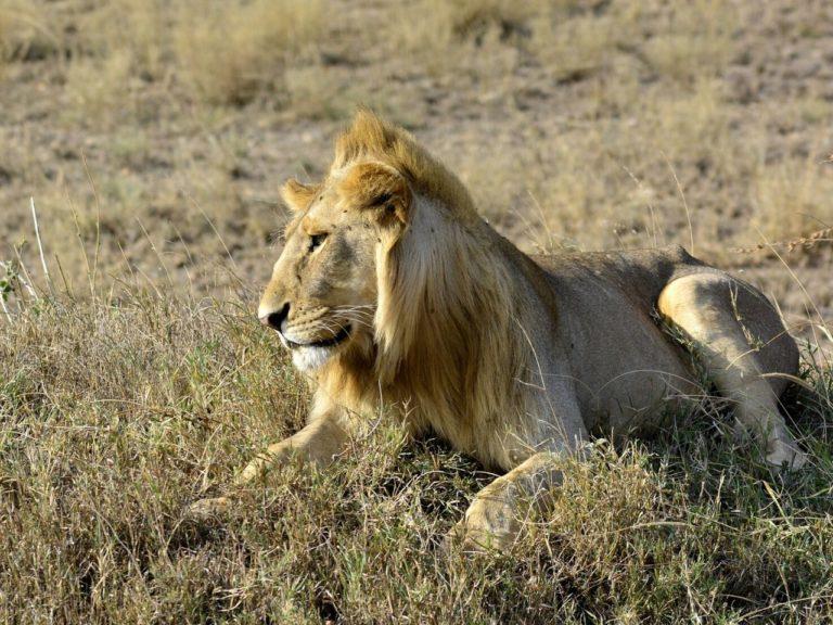 3 Days 2 Nights Tsavo Safari Tour. Leadwood Expeditions