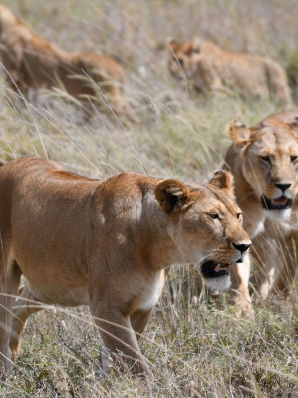 3 Days 2 Nights Short Northern Circuit Safari