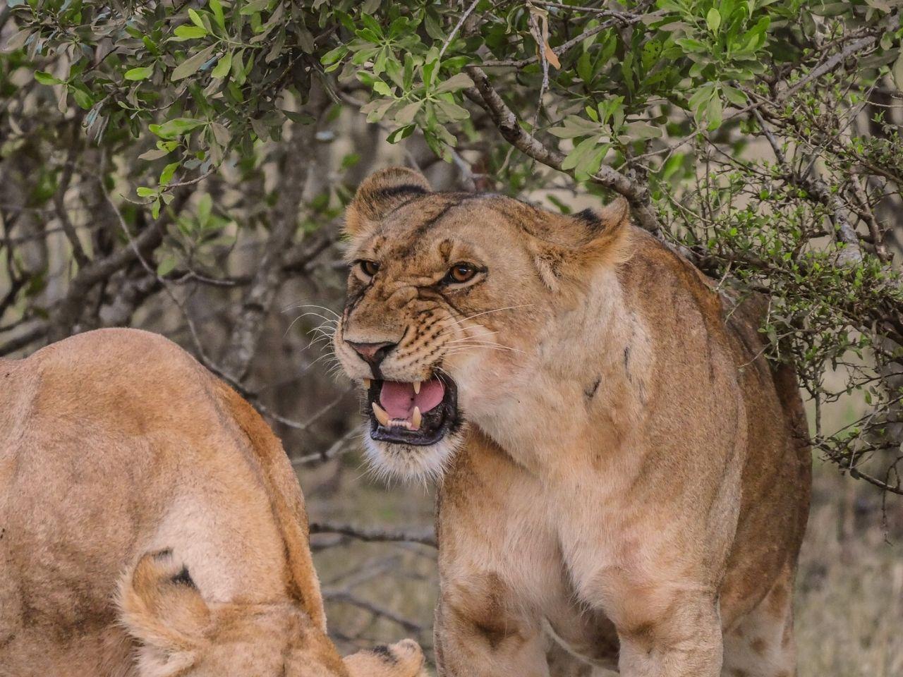 6 Days 5 Nights Magical Kenya Safari Tour. Leadwood Expeditions
