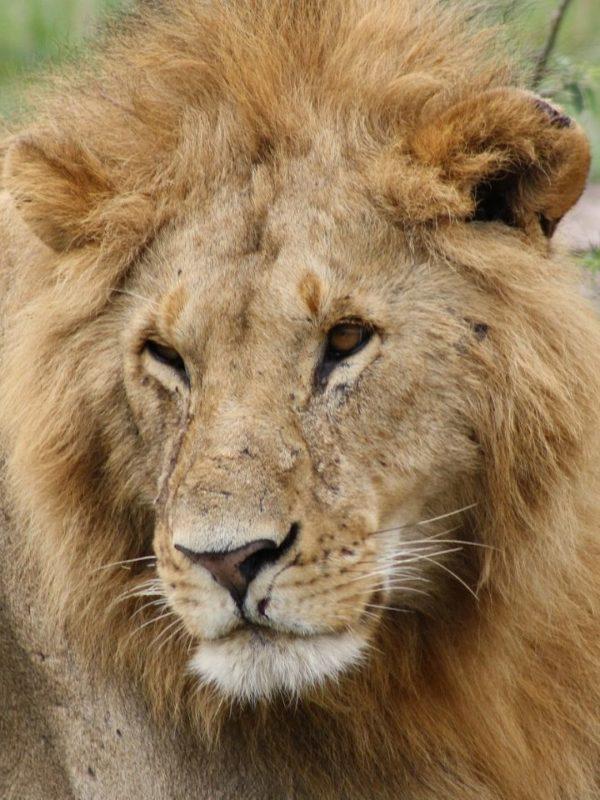 7 Days 6 Nights Rift Valley Lakes and Masai Mara Safari. Leadwood Expeditions