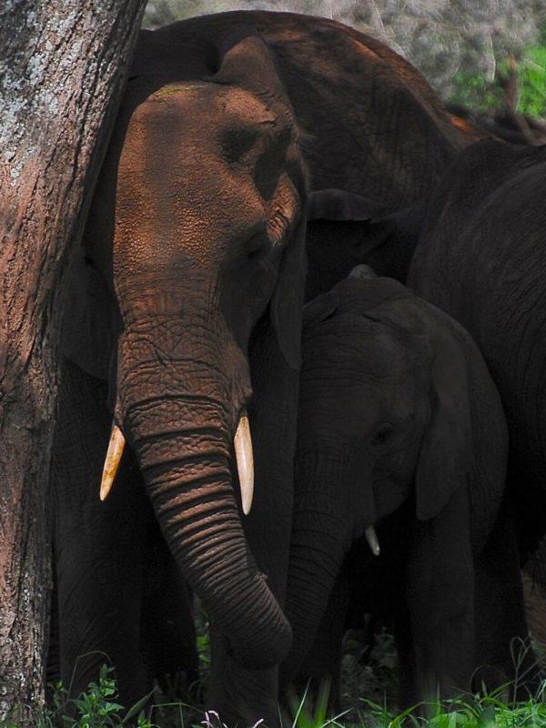 7 Days 6 Nights Taste of Northern Tanzania Safari. Leadwood Expeditions