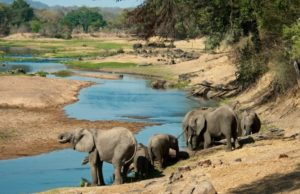 Ultimate safari adventure: elephant by the Ruaha river