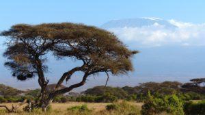 view of mt kilimanjaro