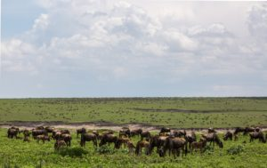 Ultimate safari adventure: Tanzania wildlife