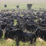 8 Days Tanzania Great Migration Experience. Leadwood Expeditions