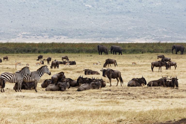 8 Days Tanzania Great Migration Experience