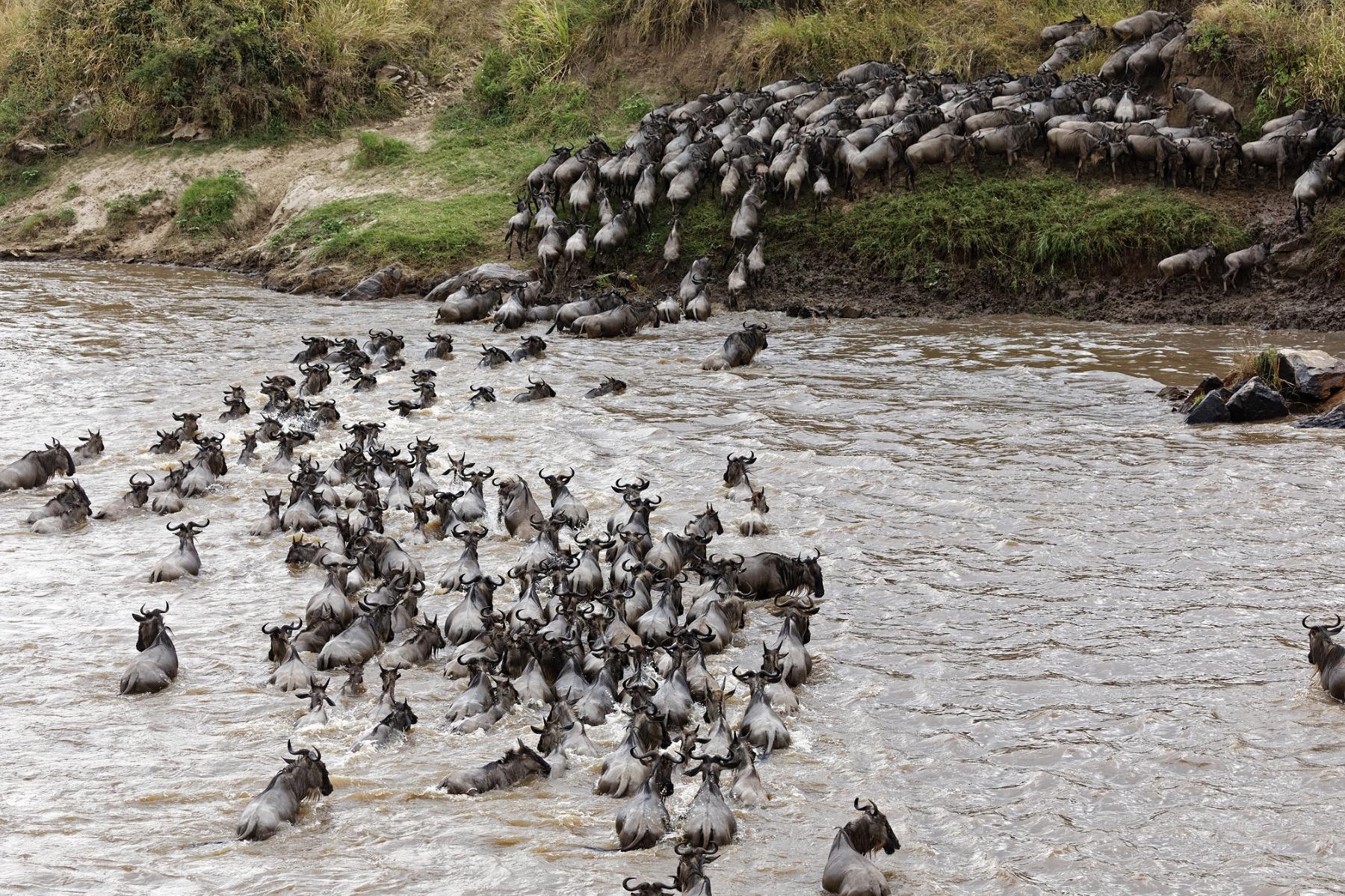 12 Days Standard Budget Kenya To Tanzania Best Safari