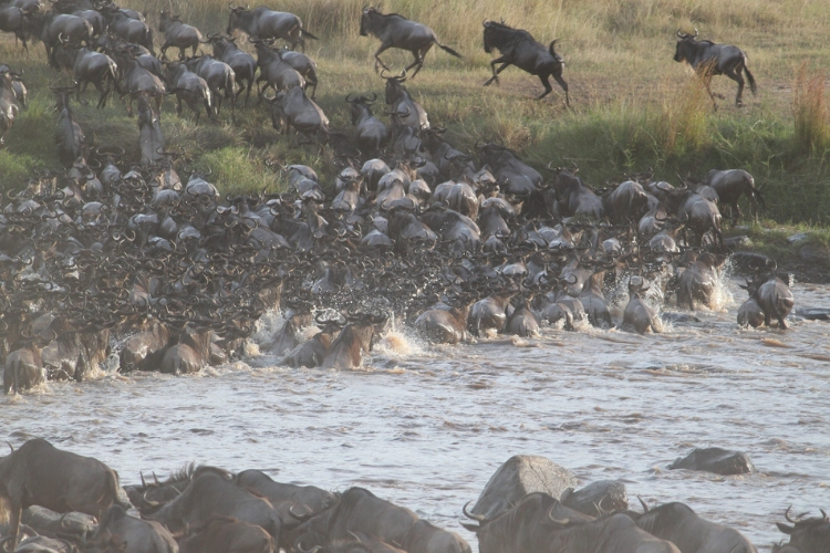 great migration tour - The Northern Serengeti