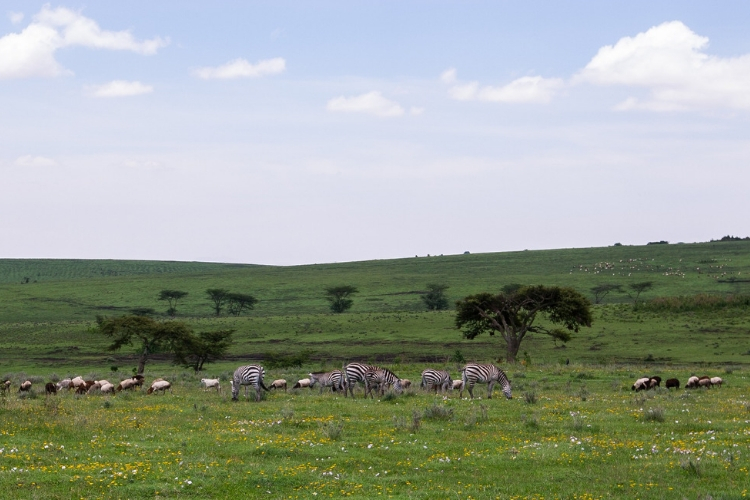 Great migration tour - The Central Serengeti (Seronera)