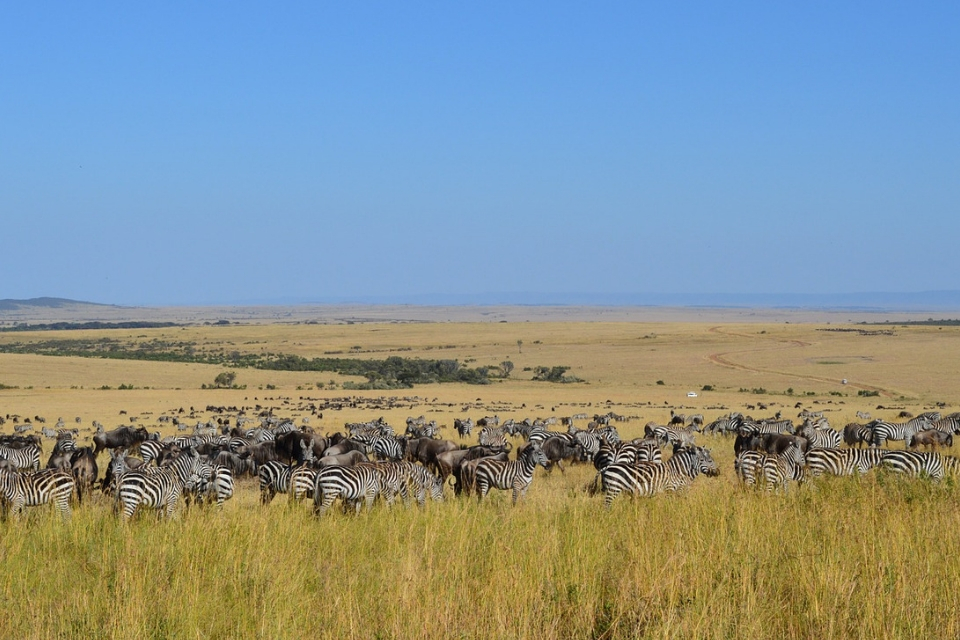 Kenya Safari Jaw Dropping Wildlife
