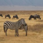 7 Days 6 Nights Group Joining Taste of Northern Tanzania Safari. Leadwood Expeditions
