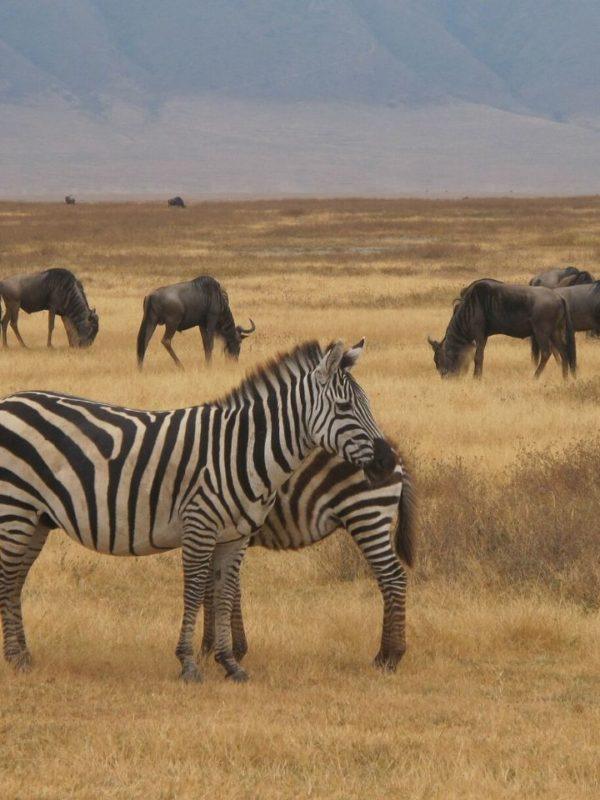 7 Days 6 Nights Group Joining Taste of Northern Tanzania Safari. Leadwood Expeditions