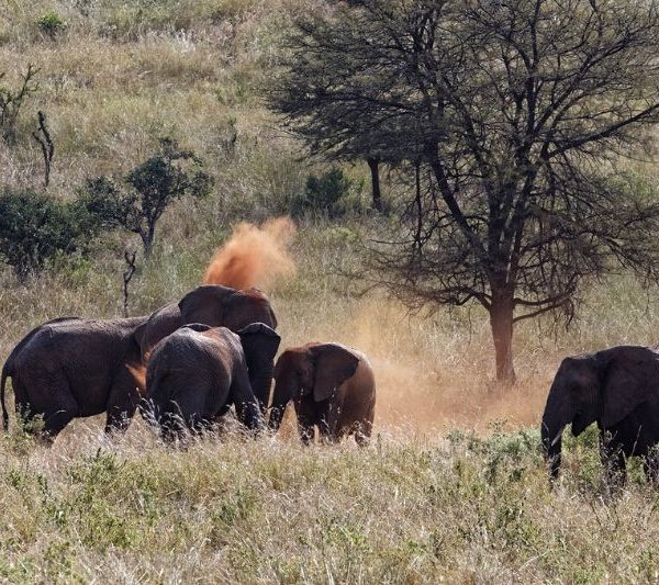 7 Days Group Joining Taste of Northern Tanzania Safari. Leadwood Expeditions