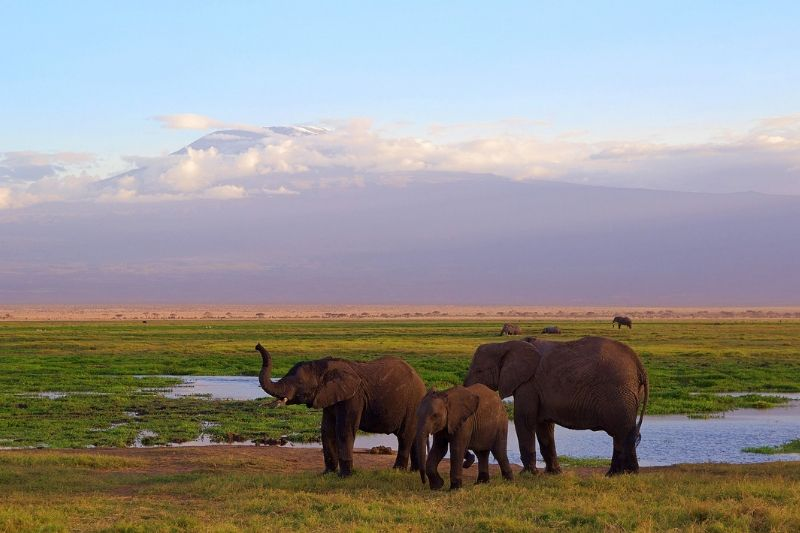 Amboseli National Park. Safari Park To Include In Kenya Itinerary. Leadwood Expeditions