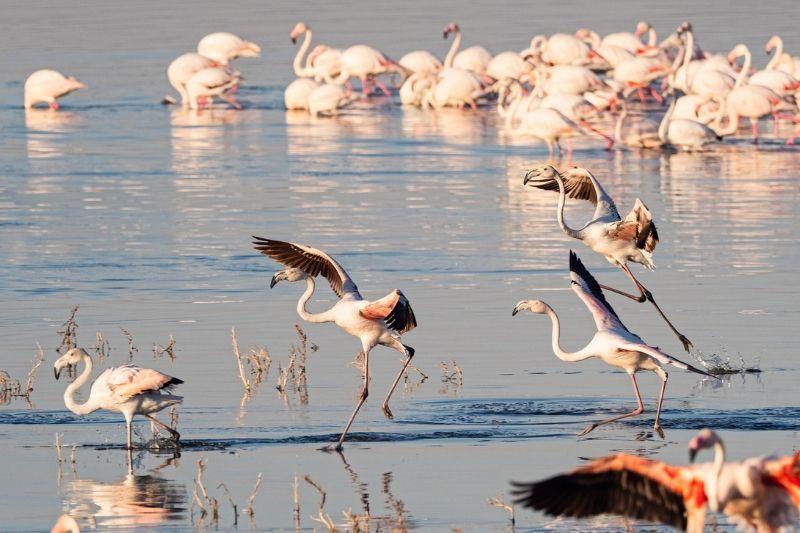 Lake Nakuru Park. Safari Park To Include In Kenya Itinerary. Leadwood Expeditions
