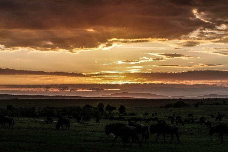 Maasai Mara. Safari Park To Include In Kenya Itinerary. Leadwood Expeditions