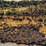 Masai Mara. Safari Park To Include In Kenya Itinerary. Leadwood Expeditions