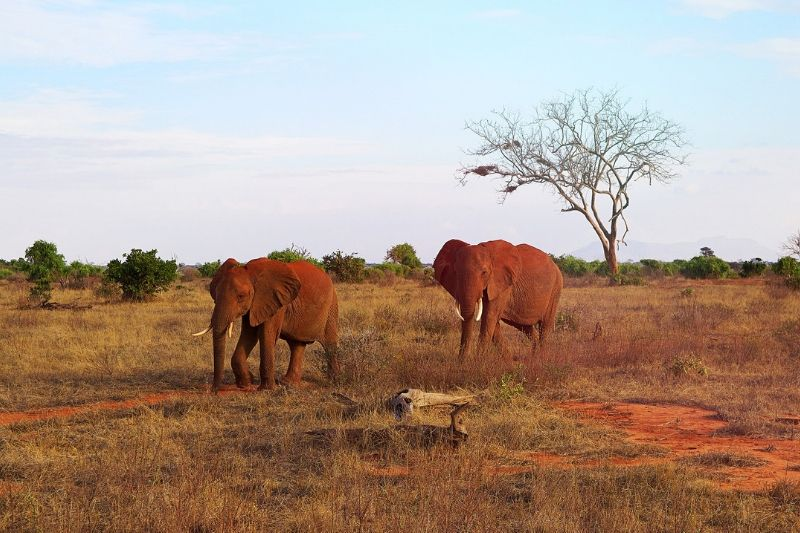 Tsavo National Park. Safari Park To Include In Kenya Itinerary. Leadwood Expeditions