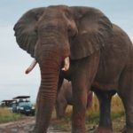 Elephants. What To Expect In A Group Joining Safari Tour. Leadwood Expeditions