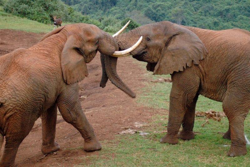 Elephants in Aberdare National Park.