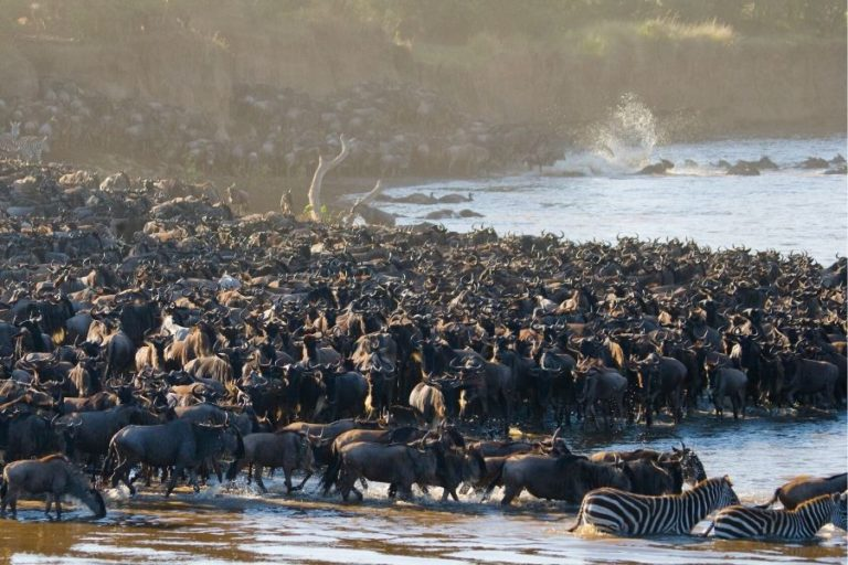 Wildebeest River Crossing. Mara Vs Serengeti: Where To Go If You Can Only Choose One. Leadwood Expeditions