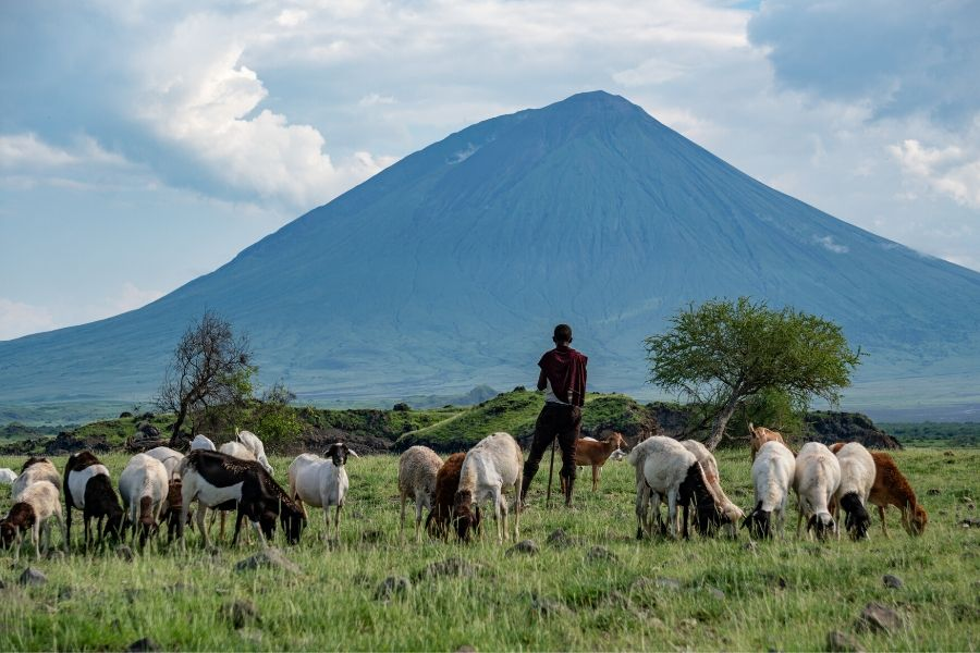 Masai Mara vs Serengeti. Masai Mara Vs Serengeti: Where To Go If You Can Only Choose One. Leadwood Expeditions