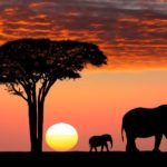 Kenya vs. Tanzania: Which safari to choose for first-timers. Leadwood Expeditions
