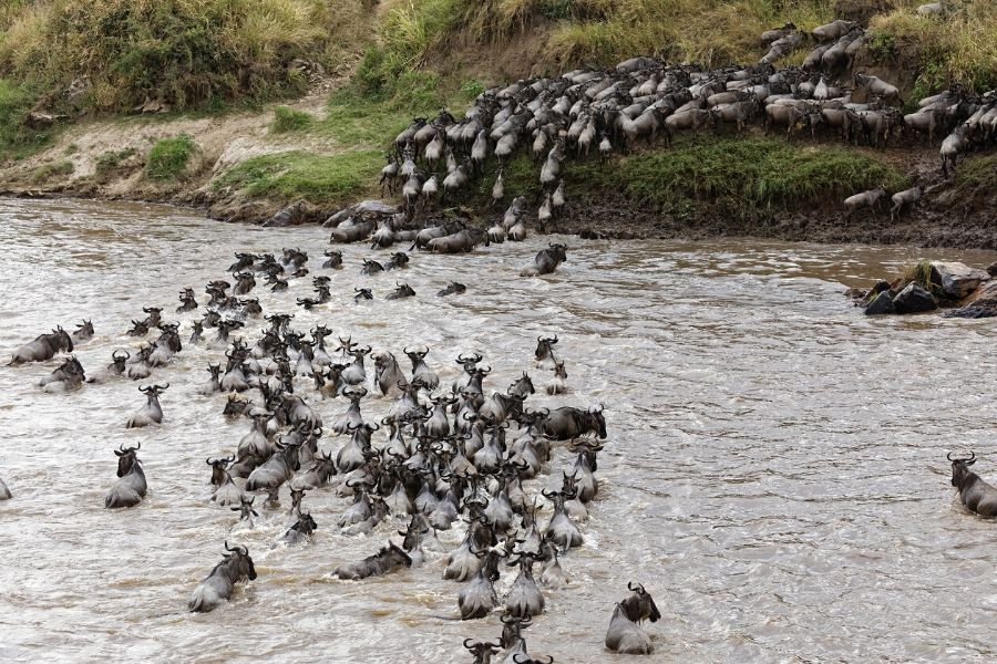 Great migration in the masai river. Kenya vs. Tanzania: Which safari to choose for first-timers. Leadwood Expeditions